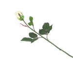 View large Artificial 60cm Single Stem Closed Bud Cream Rose - Artificial Luxury Silk Flower Range UK