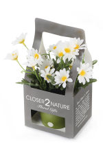 View large Artificial 18cm White Marguerite Daisy Plant with Gift Box - Artificial Silk Plant and Tree Range UK