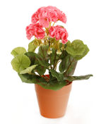 View large Artificial 24cm Pink Zonal Geranium Plug Plant - Artificial Bedding Plug Plant and Display Range UK