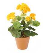 View large Artificial 24cm Yellow Zonal Geranium Plug Plant - Artificial Bedding Plug Plant and Display Range UK
