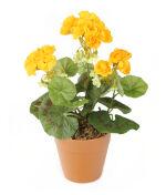 View large Artificial 24cm Yellow Zonal Geranium Plug Plant - Artificial Bedding Plug Plant and Display Range UK