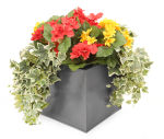 View large Artificial Red and Yellow Begonia Display in a 20cm Graphite Grey Square Planter - Artificial Bedding Plug Plant and Display Range UK