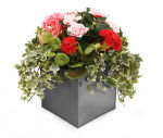 View large Artificial Pink and Red Geranium and Azalea Display in a 20cm Graphite Grey Square Planter - Artificial Bedding Plug Plant and Display Range UK