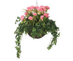 "View large Artificial Pink Geranium Display in a 14"" Round Willow Hanging Basket - Artificial Bedding Plug Plant and Display Range  UK"