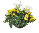 """View large Artificial Yellow Pansy and White Geranium Display in a 12"""" Round Willow Hanging Basket - Artificial Bedding Plug Plant and Display Range UK"""