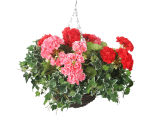 "View large Artificial Pink and Red Geranium Display in a 10"" Round Willow Hanging Basket - Artificial Bedding Plug Plant and Display Range UK"