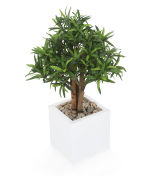 "View large Artificial 1ft 7"" Long Leaf Fig Tree - Artificial Silk Plant and Tree Range UK"