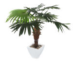 View large Artificial 5ft Windmill Fan Palm Tree - Artificial Silk Plant and Tree Range UK
