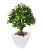 "View large Artificial 1ft 7"" Japanese Mock Orange Tree - Artificial Silk Plant and Tree Range UK"