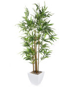 "View large Artificial 5ft 8"" Golden Bamboo Tree - Artificial Silk Plant and Tree Range UK"