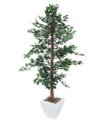 View large Artificial 6ft Midnight Weeping Fig Tree - Artificial Silk Plant and Tree Range UK