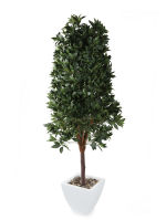 View large Artificial 6ft Bay Tree Pyramid Topiary - Artificial Silk Plant and Tree Range UK