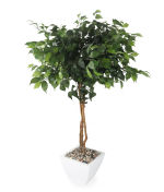 View large Artificial 4ft Danielle Weeping Fig Tree - Artificial Silk Plant and Tree Range UK