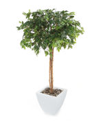 View large Artificial 5ft Danielle Weeping Fig Tree - Artificial Silk Plant and Tree Range UK