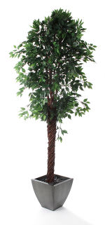 View large Artificial 8ft Midnight Weeping Fig Tree - Artificial Silk Plant and Tree Range UK