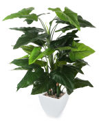 View large Artificial 4ft Calla Lily Plant - Artificial Silk Plant and Tree Range UK